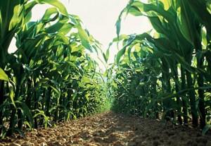bayer_crop_science_Bigger