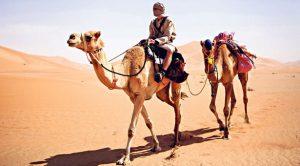 Camel_615x340
