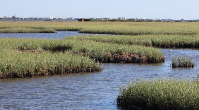 water management Louisiana