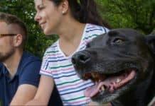 Boehringer Ingelheim Animal Health USA Inc.