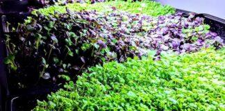 Geoponica Greens
